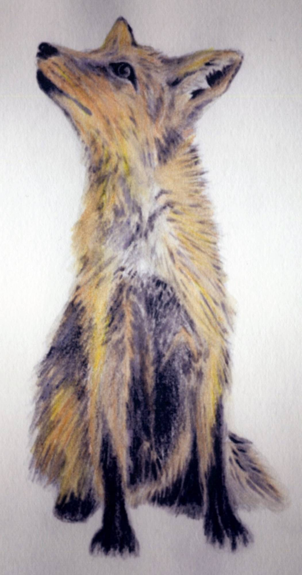 A6 coloured pencil sketches 5.8 x 4.1 Inches